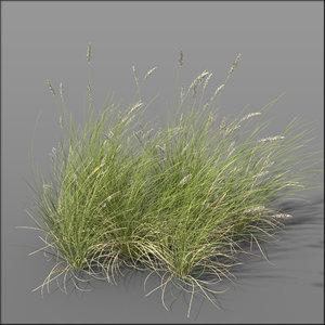 grass dune grass2 3d model