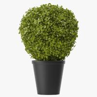 obj shrubs pots