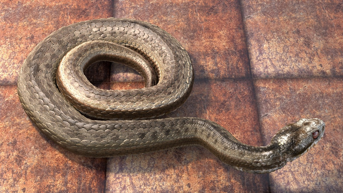 adder viper snake animation 3d c4d