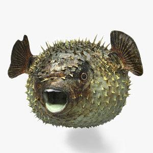 3d fugu fish model