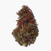 marijuana bud 02 03 max
