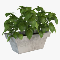 realistic home plant max