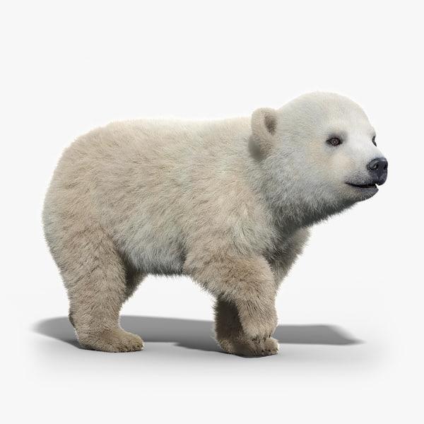 3d polar bear baby fur model