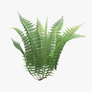 3d model of ferns 01 02