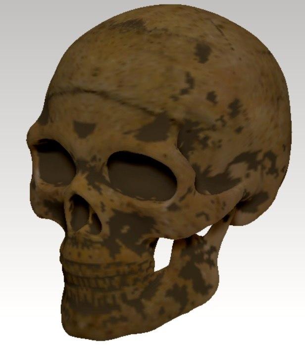 skull human skul obj