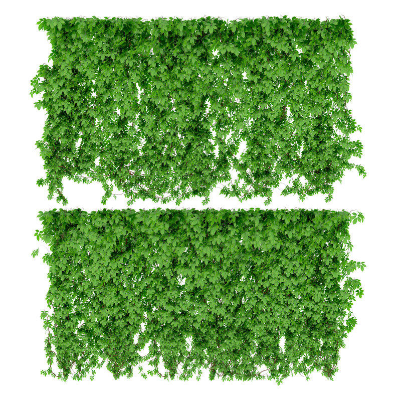 3d wall parthenocissus 2 items