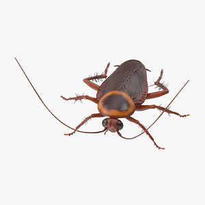 cockroach 01 c4d