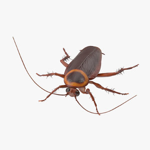3d model cockroach 02