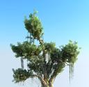 Tree of Life Ultra HD