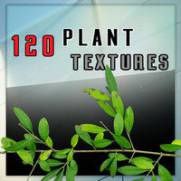 120 Plant Textures HD PNG