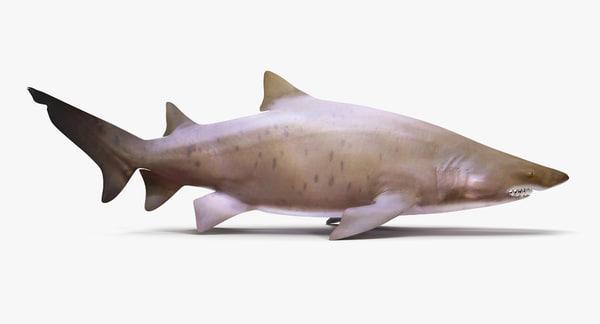 3d max sand tiger shark
