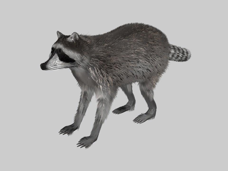 3d raccoon animation