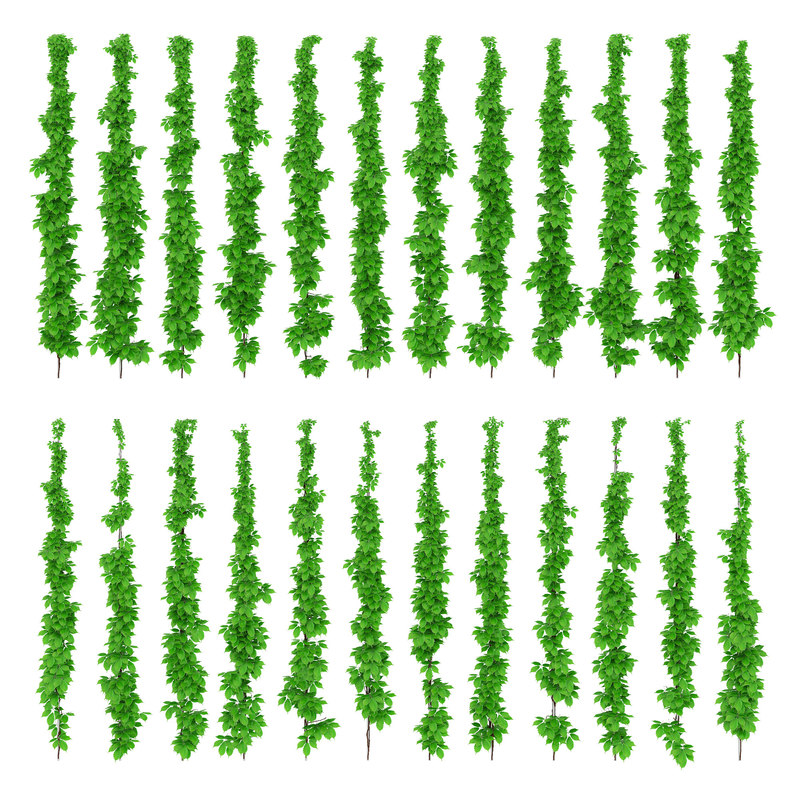 leaves grapes vine max