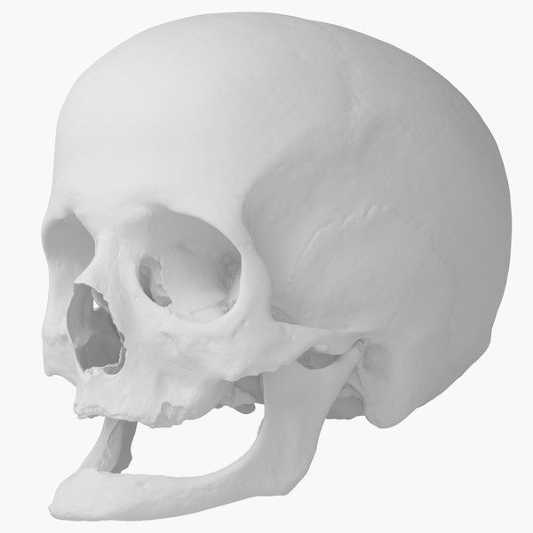 3d real human skull scan model