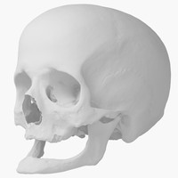 Real Human Skull 3D Scan 01 (No Texture)