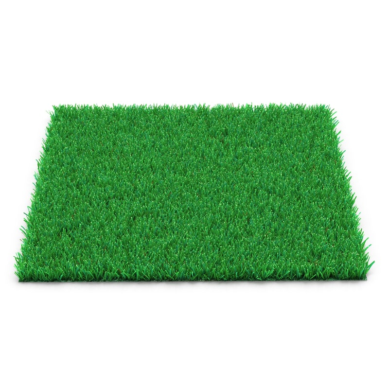 3d model kentucky bluegrass grass