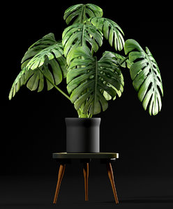 3d model cheese plant