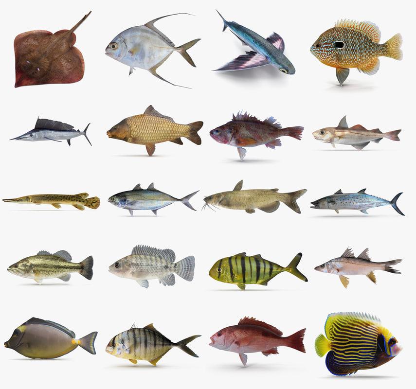 Fish 3d model for 13 fishing origin c