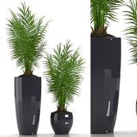 parlour palm plant max