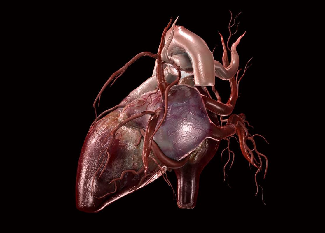 human heart animation 3d model