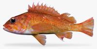 starry rockfish 3d fbx