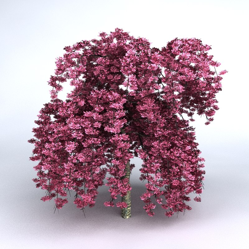 tree cherry 3d 3ds