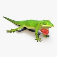 carolina anole lizard max