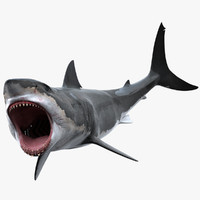 3d model shark rigged white