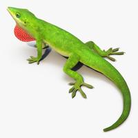 3d carolina anole lizard pose model