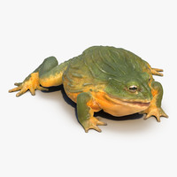 3d model african bullfrog rigged