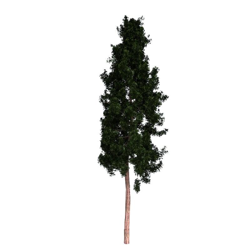 3d redwood giant model