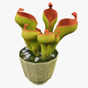 heliamphora flower 3d max