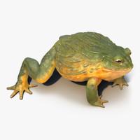 african bullfrog 3d max