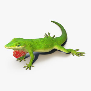 max carolina anole lizard rigged