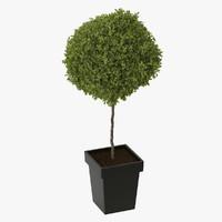 tree plant 3d max
