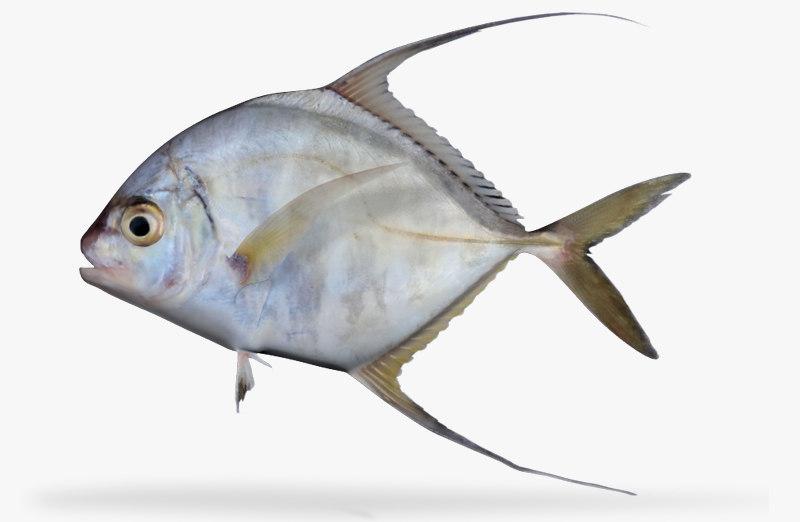 ma threadfin jack