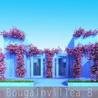Bougainvillea 8