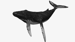 humpback whale 3d max