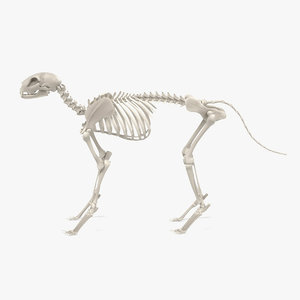 cat skeleton 3d 3ds