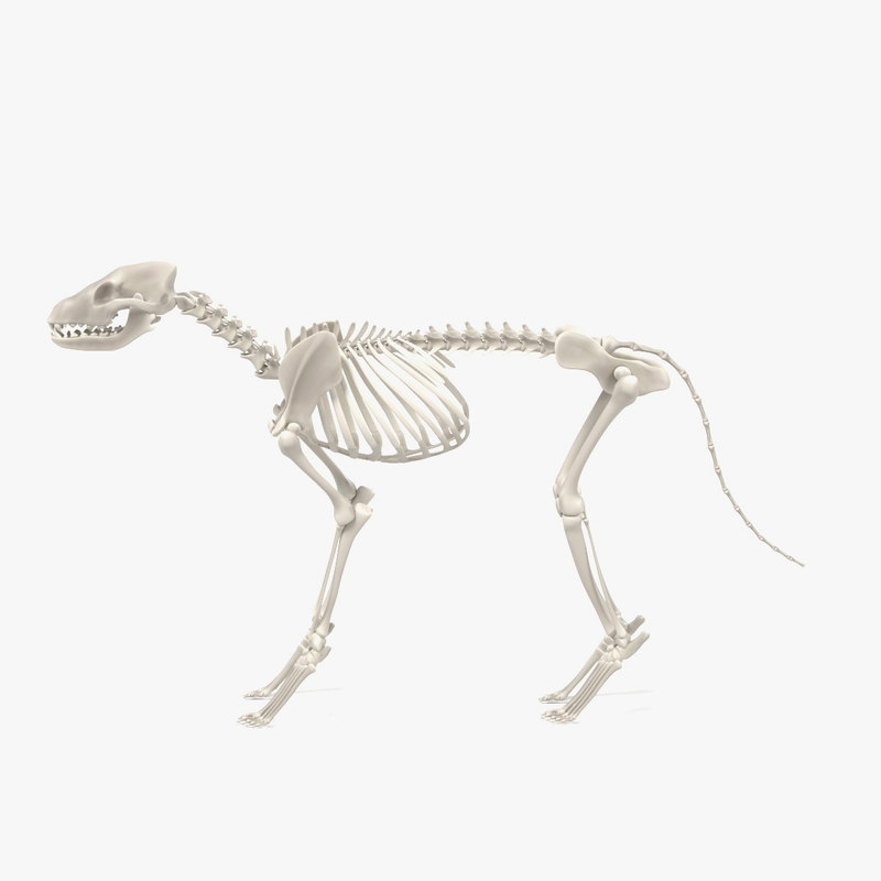 obj dog skeleton