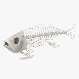 fish skeleton 3d obj