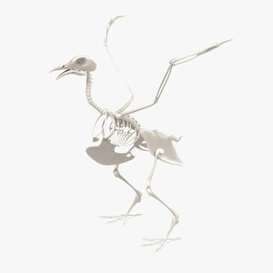 3d model pigeon skeleton