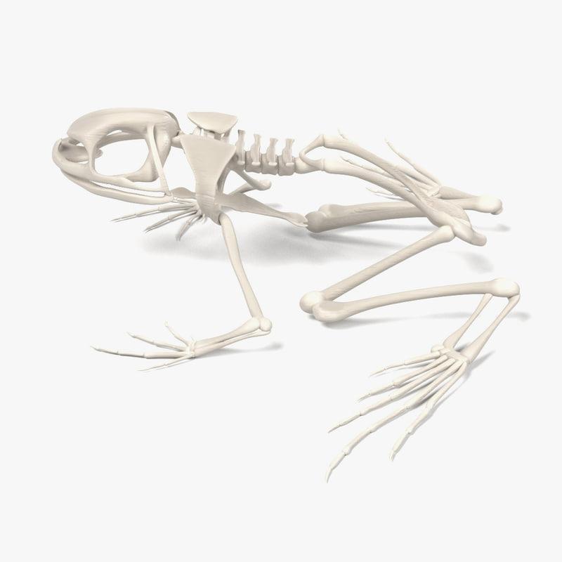 toad skeleton 3d model