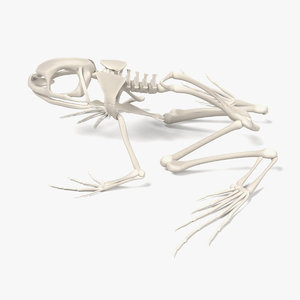 toad skeleton 3d model