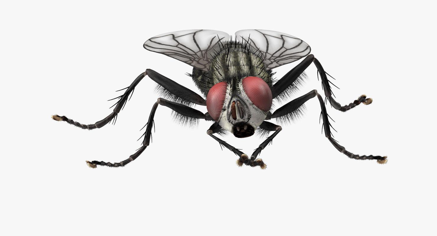 3d model house fly rubbing legs