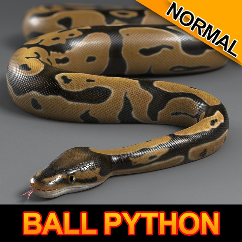 max normal ball python