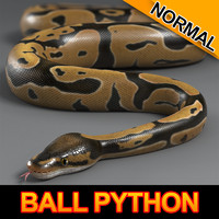 Ball Python (Normal)