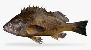 3d squarespot rockfish