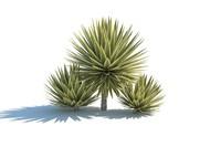 3d model piteira caribe