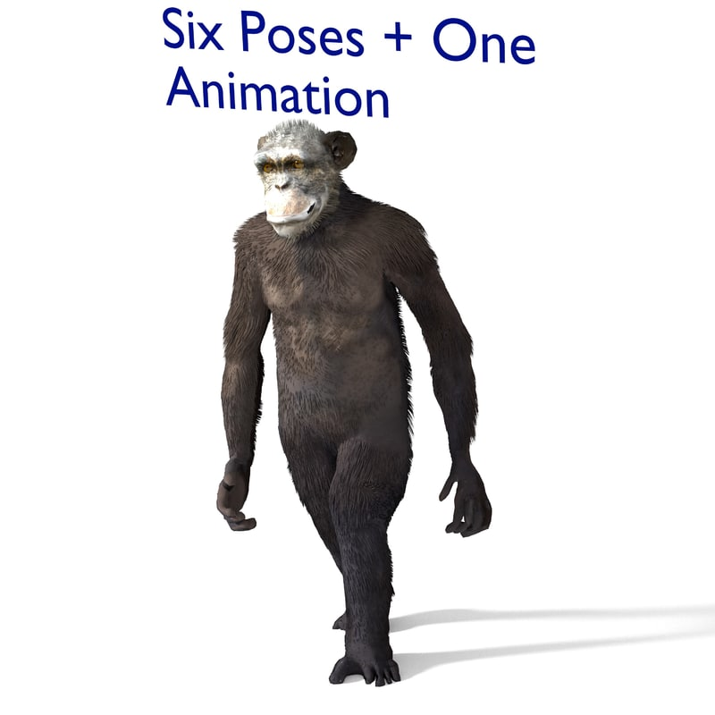 3d model chimp chimpanzee
